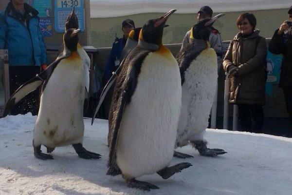 พาเหรดแพนกวิน ไฮไลท์ที่สำคัญของสวนสัตว์แห่งนี้จะมีเฉพาะในฤดูหนาวเท่านั้น จะมีการจัดเวลาการเดินเป็น 2 รอบต่อวัน รอบละประมาณ 40 นาที