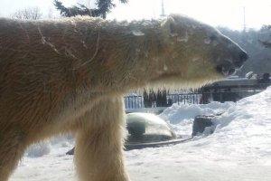 หมีขาวที่ใครๆมาที่นี่ก็ต้องมาถ่ายรูปกับความน่ารักของหมีชนิดนี้