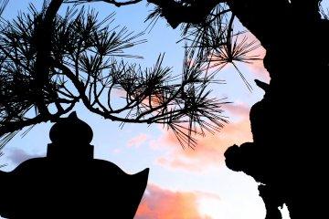 나는 일본 소나무의 모양이 좋다