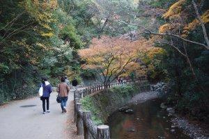 ใบไม้หลากสี