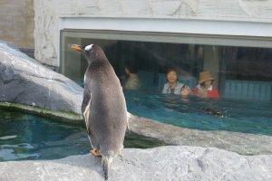 ยลโฉมเพนกวิน