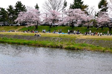 벚꽃 나무 아래 있는 하나미 소풍가들