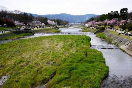 Musim Semi di Tepi Kamogawa
