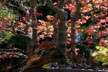 분홍색 단풍잎 아래에 있는 붉은 이끼꽃들