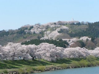 満開の桜と山頂の観音像