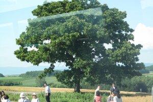 ต้นไม้คู่เมืองบิเอะ
