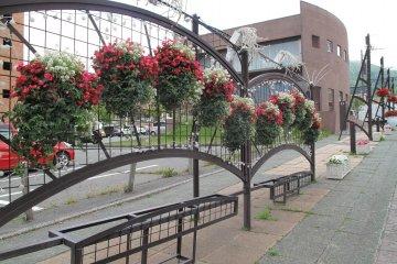 <p>ทุกหนแห่งของเมืองโทยาประดับประดาด้วยดอกไม้สวย</p>