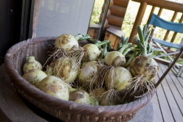 <p>Garden onions on the porch</p>