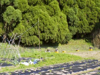 Đi bộ lên sườn đồi, băng qua các tổ ong và những cánh đồng rau