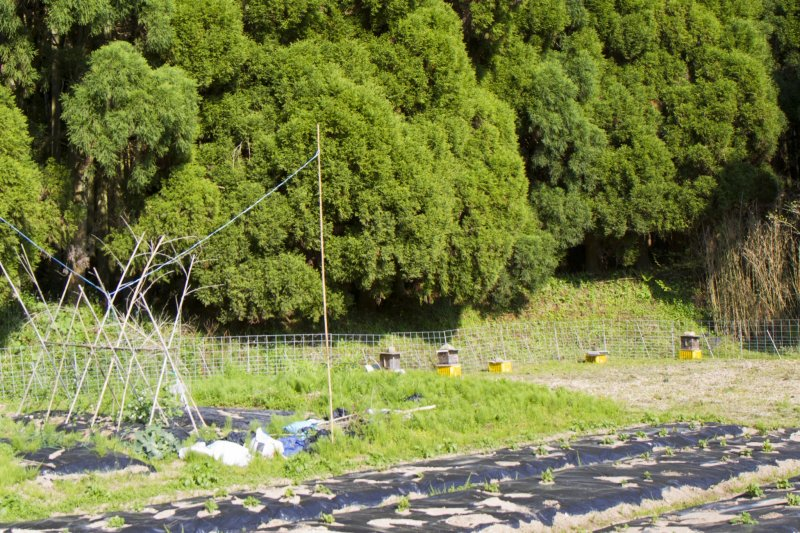 <p>Walk up the hillside, past these beehives and vegetable fields</p>