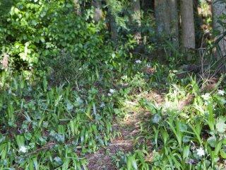 Đám hoa dại dẫn vào rừng