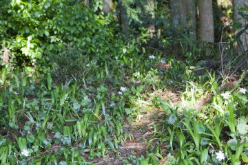 <p>A patch of wildflowers leads into the woods</p>