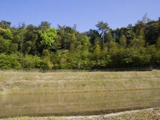 Những cánh đồng ngập nước sẽ sớm tràn ngập sắc mạ non
