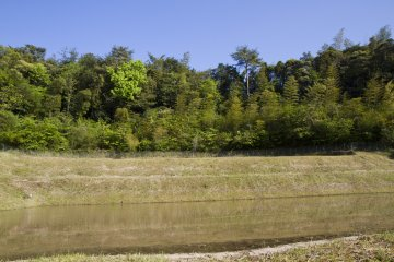 <p>These flooded fields will soon be filled with rice seedlings</p>