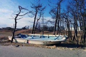 Um barco de pesca deixado onde está, em Gamo. Este local fica a cerca de dois quilómetros ou pouco mais de uma milha do oceano. As árvores morrem lentamente pois o solo ficou salgado.