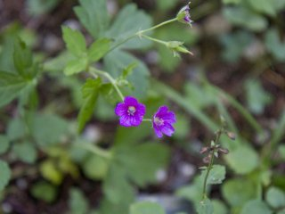 Tiny purple flowers add subtle color to the trail