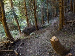 Ngọn núi Kana bao phủ bởi rừng già