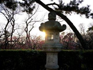매화나무 과수원에서 보이던 석양