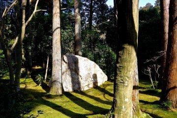 료안지에는 많은 돌들이 있다