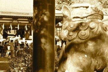 The Beauty of Afuri Jinja Shrine