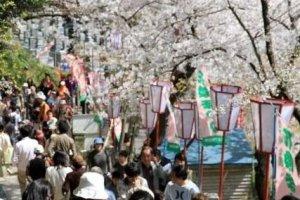 祭りの期間中は見頃の桜見物とともに県内外から訪れる多くの人で賑わう