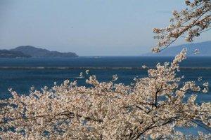 海抜86メートルの所にある月見御殿からは敦賀湾が一望できる