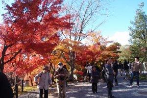 ใบไม้เปลี่ยนสีไปทั้งวัด