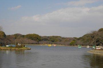 <p>The secret hanami spot...Enjoy!</p>