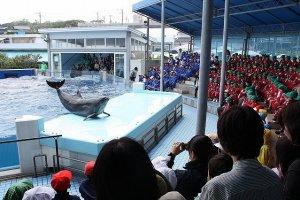 イルカショー。複数頭のイルカが見事に調教されている