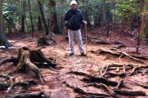 Kinone-michiทางเดินธรรมชาติด้านหล้งวัดKurama-dera