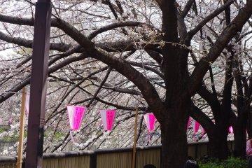 <p>ที่ Meguro River มีที่ให้คุณและเพื่อนรักแวะนั่งพักตลอดทาง</p>
