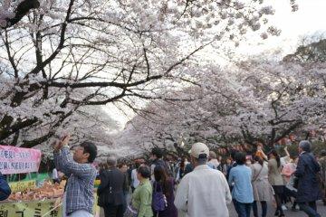 <p>ตกบ่ายที่ ueno park ผู้คนเนืองแน่น เดินเล่น นั่งกิน ถ่ายรูป</p>