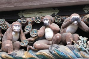 Meet the monkeys in Nikko
