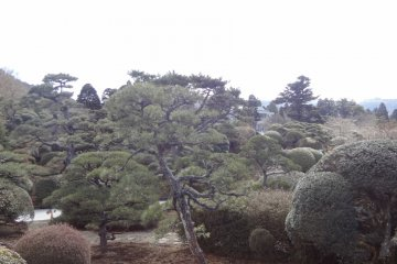 When you climb up the hill, the woods changes from natural trees to well-trimmed trees. This area is a garden and the former location of the Imperial villa main house.
