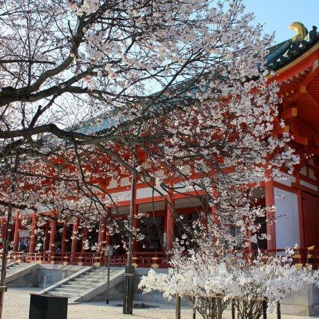 Kyoto's Heian Jingu Shrine