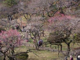 Yokohama's Okura-yama Park