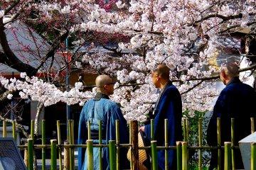 벚꽃을 즐기는 사제들