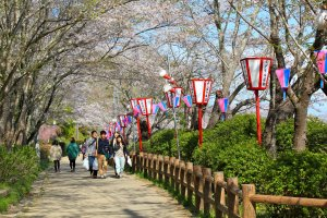 Beautifully landscaped walking paths and lanterns to celebrate the cherry blossom season