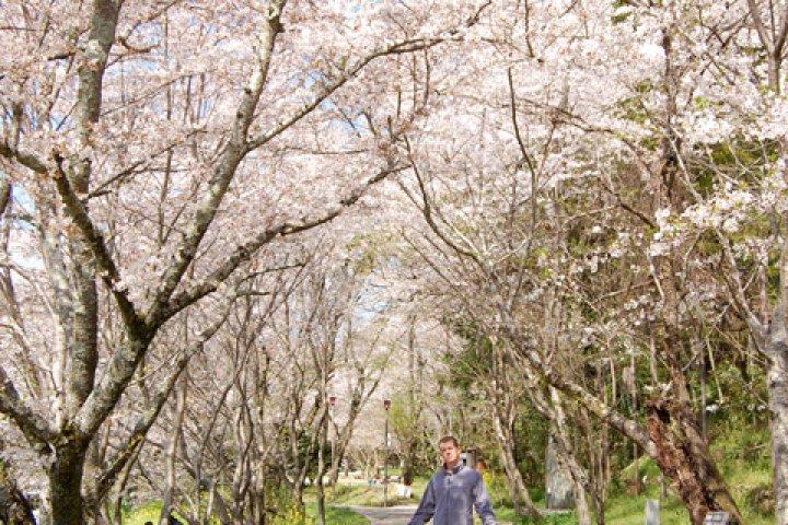 The Chisei Area of Uchiko