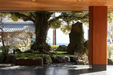 <p>When Beniya&nbsp;was first established, these trees were planted. Throughout Beniya&#39;s&nbsp;history, the trees continue to watch over the ryokan</p>