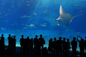 Admiring the manta rays.