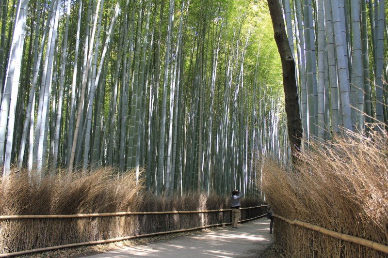 The Bamboo Forest Of Arashiyama Kyoto Japan Travel Japan Tourism Guide And Travel Map