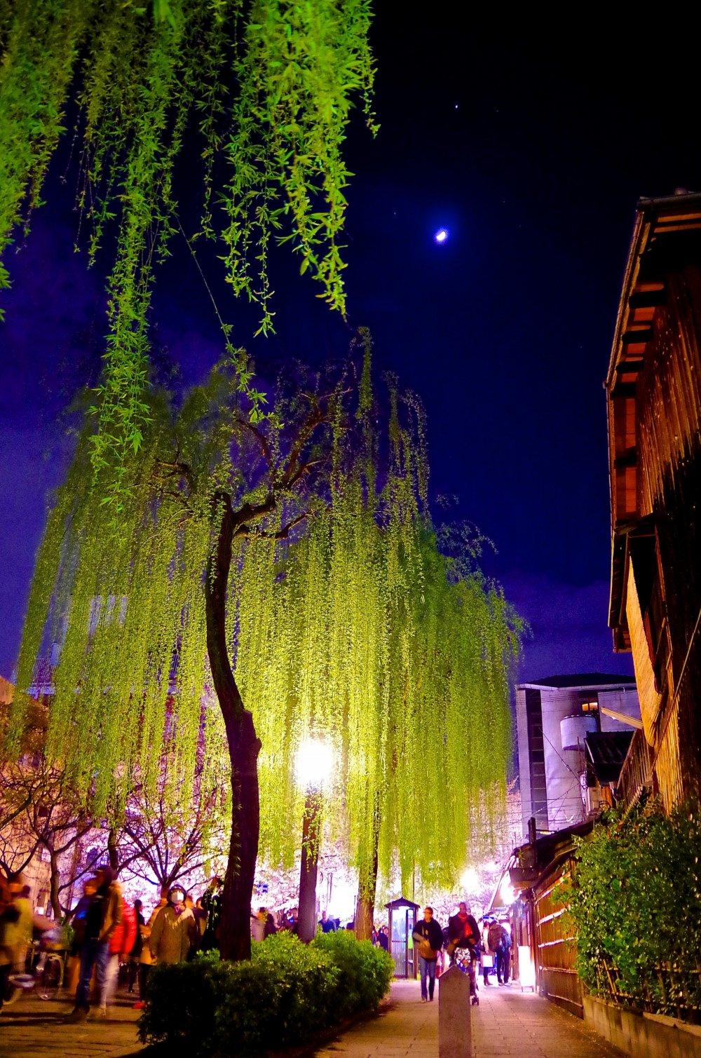 La rue de Gion Shirakawa de nuit