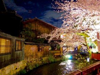 Illuminations des fleurs de cerisiers