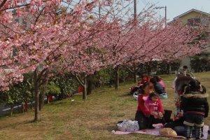 Un picnic bajo los árboles.