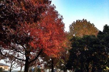 Парк Синрин осенью