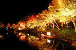 The Naba No Sato gardens ablaze with lights...
