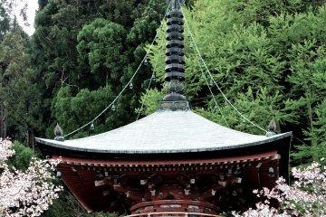 벚꽃의 계절에 탑