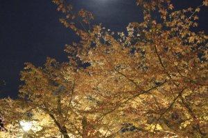 ดวงจันทร์ก็ส่องสว่างแข่งกับความสว่างไสวในสวน