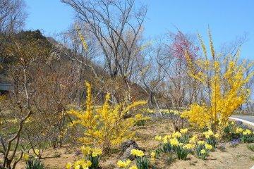 언덕 꼭대기로 가는 길을 따라 흐르는 다채로운 꽃들